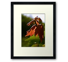 Spring Colours Framed Print