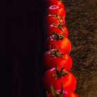 Tomato crop begins! by indiafrank