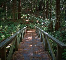 Russian River State Park by Stuart Green
