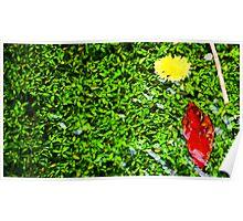 Stream Detail 3 Flower & Leaf Poster
