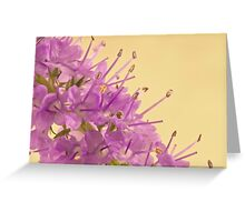 Campanella Flower Macro Greeting Card
