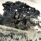 Tree in Meadow by Ant Vaughan
