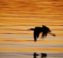 Flight by Wanagi Zable-Andrews