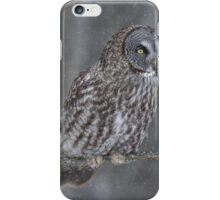 Perching Owl... iPhone Case/Skin