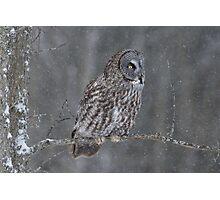 Perching Owl... Photographic Print