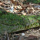 crocodile smile by Neil Mouat