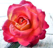 Stolen Rose by BecsPerspective