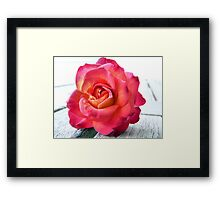 Stolen Rose Framed Print