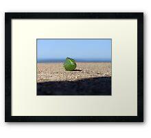 Wind Seeker Framed Print