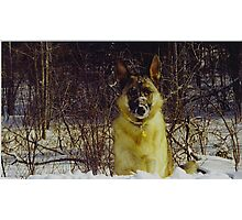 Goliath Snow Face (For sale) Photographic Print