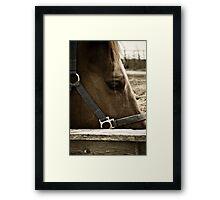 Equine Eyes Framed Print