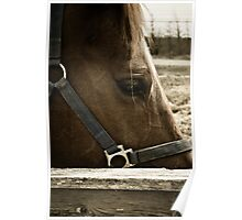 Equine Eyes Poster