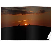 Seagull in sunset Poster