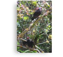 Turkey Vultures (Cuba) Canvas Print