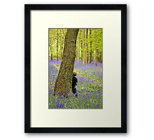 Boy in the Bluebell Wood Framed Print