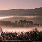 Morning Mist  by Paul Sims