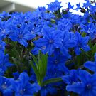 Blue Ground Cover by lareejc
