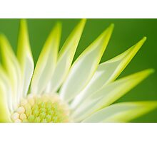 Blooming Gorgeous Photographic Print