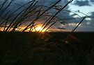 Highlighted Grass... Sunset in the Northern Cape Province, South Africa by Qnita