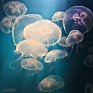 moon jellies by Jenifer