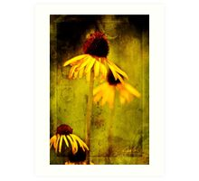 Yellow Coneflower - Oklahoma City Zoo - 2011 Art Print