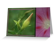Morning Glory Diptych... South Africa, Free State Greeting Card
