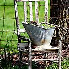 Old Chair by denise romano