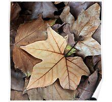 Fallen - Autumn Leaves in Oakbank Poster