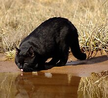 Enjoying Water by Marko Palm