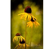 Yellow Coneflower - Oklahoma City Zoo - 2011 Photographic Print
