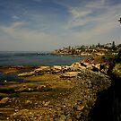 North to La Jolla by dale427