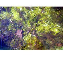Paleo Ice Cube Photographic Print
