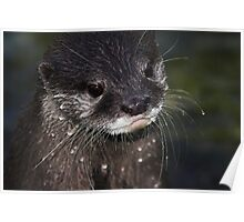 Wet Whiskers Poster