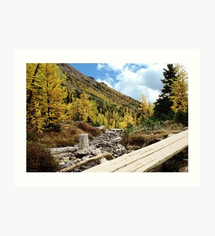 Autumn Pines and bridge on Logan Pass Art Print