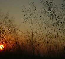 Free State Sunset (7) South Africa by Qnita