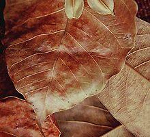 Bodhi Leaf  by alanmcarthur