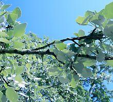 Branch of silver birch-tree. by daffodil