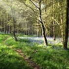 Woodland Edge by John Edwards