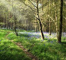 Woodland Edge by John Edwards
