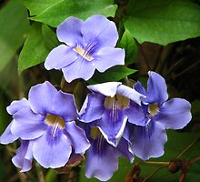 purple flowers by marybee