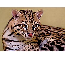 Golden Eyes Photographic Print