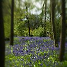 Blue Bell Wood II by Matthew Walters