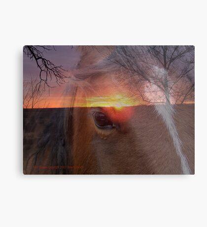 Equine Sunrise Metal Print