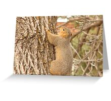 Just Hanging Out. Greeting Card