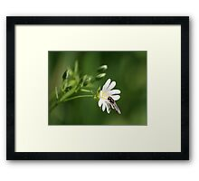 Beauty and the Beast ..... Framed Print