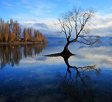 Wanaka Lake Tree by Charles Kosina