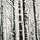 WINTER TREES by rue2