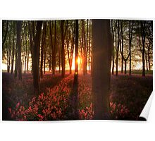 DAWN OVER BLUEBELLS Poster