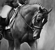 Elegance Dressage Horse in Black and White  by Michelle Wrighton