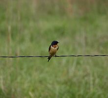 bird on a wire by mckee81